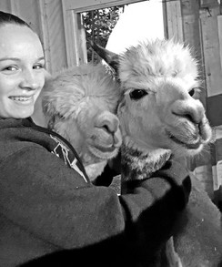 Alpacas love attention.