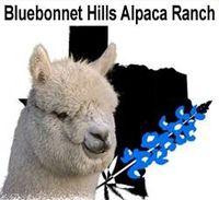 Bluebonnet Hills Alpaca Ranch - Logo