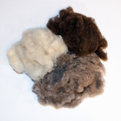 Photo of Yak Down Fiber