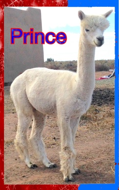 Photo of Phi Beta Paca Prince