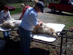 Photo of C A Shearing