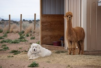 Wide Sky Ranch, an alpaca ranch in Santa Fe, NM - Logo