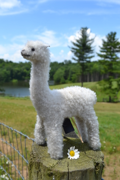 Photo of Merino White Alpaca Sculpture