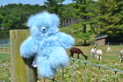 Photo of Blue Suri Alpaca Teddy Bear