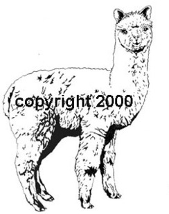 Original design Alpaca Rubber stamp