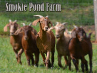 Smokie Pond Farm - Logo