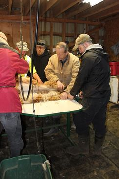 Photo of Alpaca Shearing Services