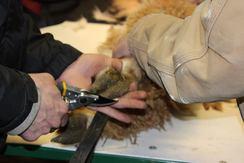 Alpaca Shearing Services