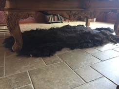 Photo of Yak Hide