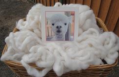 Photo of  White Baby Alpaca Roving 4.4 Oz.