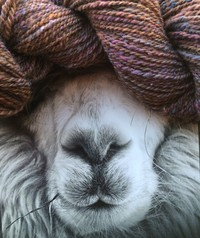 Rusty Rocks Farm Alpaca  @ The Dover Antique Mall  - Logo