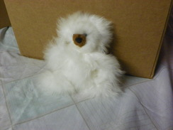 "Photo of  Toy Teddy Bear  6"" Baby Alpaca Fur"