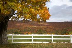 Peace beyond the fenceline