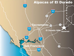 Alpacas of El Dorado is located about 50 miles east of Sacramento, CA