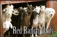Red Ranch Goats - Logo