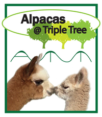 Alpacas @ Triple Tree - Logo