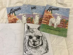 Photo of Coloring/Activity Book