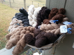 Photo of Farm Yarns