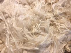 Photo of Suri Alpaca Raw Fiber Amos 11.5 oz White