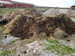 Large Supply of Manure