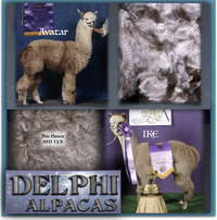 Delphi Alpacas - Logo