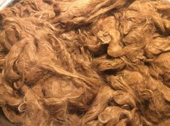 Photo of Alpaca Raw Fiber Washed Suri 1# 8 ounces