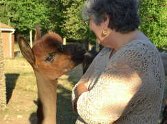 Alpaca Farm and Fiber Mill Tour