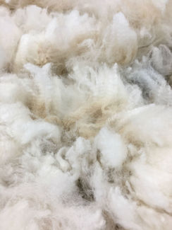 Photo of Raw: SOLD Davis White Prime Alpaca