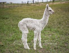 Bebop at 4 weeks old