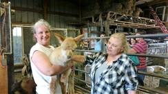 UMA Member meeting host, Mara DeBoe.  Wibotawot Farm, River Falls, WI