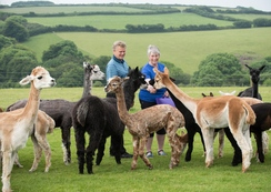 Ilfracombe alpaca farmers create disabled-friendly holiday haven
