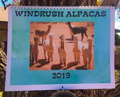 Photo of Windrush Alpacas 2019 Calendars
