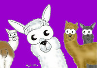 Margery-Ray Alpacas - Logo
