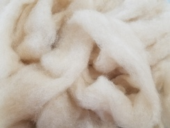 Photo of Alpaca Roving, Grade 2