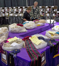 Alpaca fleece show awards.