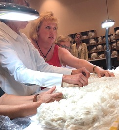Alpaca Fiber Intensive Registration