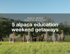 5 Alpaca Education Getaway Weekends