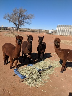 Photo of Adopt-A-Paca – Renewal