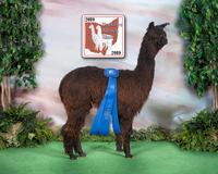 Arcona Alpacas - Logo