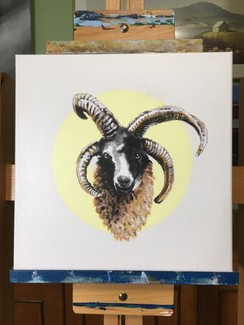 Photo of Jacob Sheep