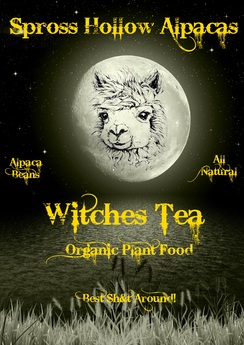 Spross Hollow's Witch's Tea