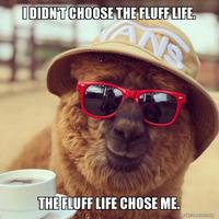 Fluff Life Shop - Logo