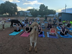 Red Full Moon Alpaca Yoga