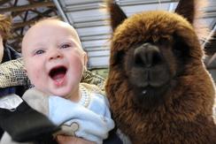 Everyone loves alpaca kisses!