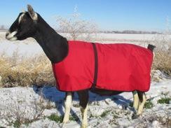 Goat Blankets