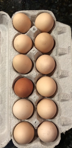 Farm Fresh Organic Eggs!