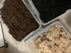 Photo of alpaca fiber, ready for carding