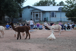 Photo of Hunter's Full Moon Alpaca Yoga