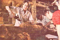 Professional Shearing