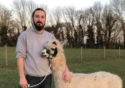 Boss expands dog business by introducing five friendly alpacas